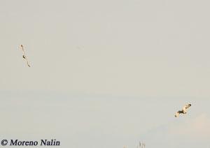 Nalin_13aprile_09