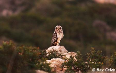 Ray_Galea_Malta_02